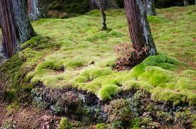 Jardin de mousse au japon
