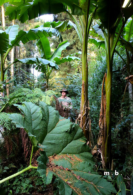 La normandie et ses jardins for Voyage jardins anglais
